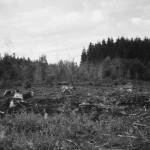 Brand des Hofstätterwaldes bei Baustarring (2006)